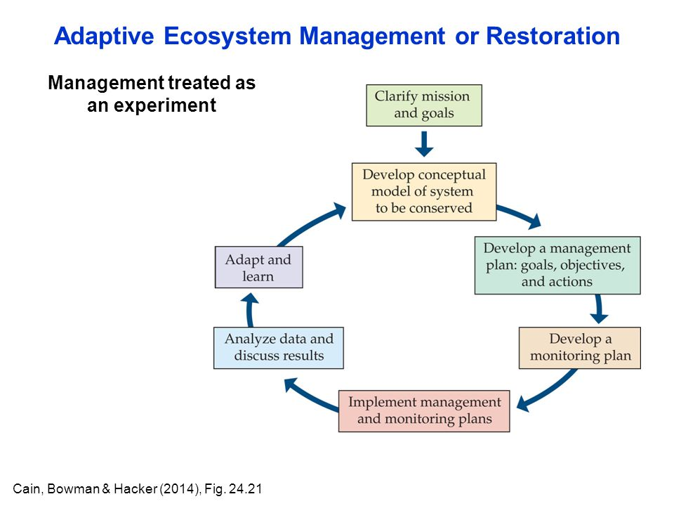 Adaptive Ecosystem Management or Restoration Management treated as an experiment Cain, Bowman & Hacker (2014), Fig. 24.21