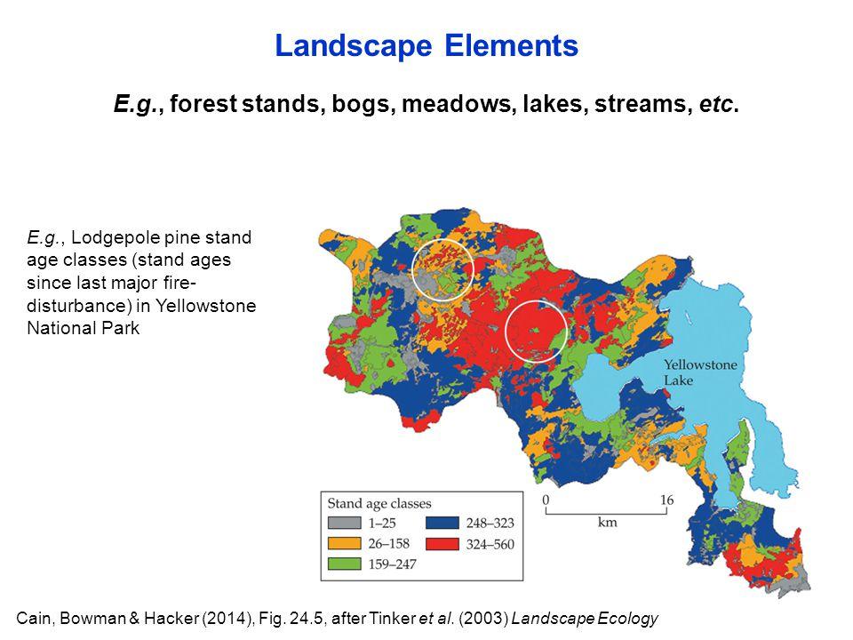 Cain, Bowman & Hacker (2014), Fig. 24.5, after Tinker et al. (2003) Landscape Ecology E.g., forest stands, bogs, meadows, lakes, streams, etc. Landsca