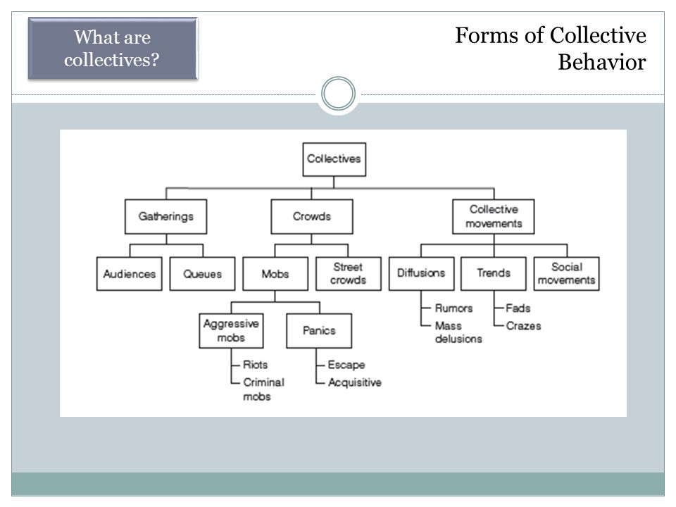 Forms of Collective Behavior What are collectives?