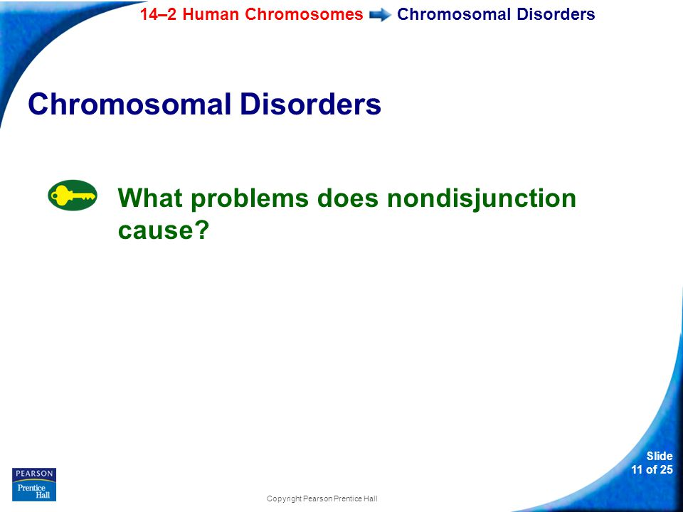 14–2 Human Chromosomes Slide 11 of 25 Copyright Pearson Prentice Hall Chromosomal Disorders What problems does nondisjunction cause?