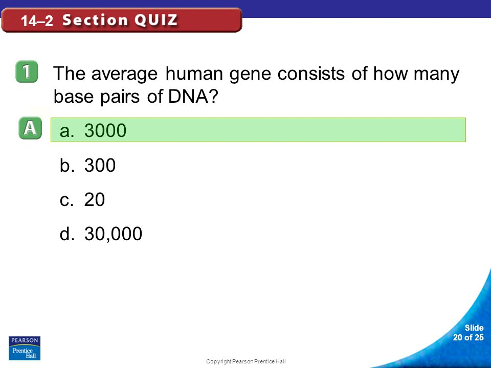Slide 20 of 25 Copyright Pearson Prentice Hall 14–2 The average human gene consists of how many base pairs of DNA.