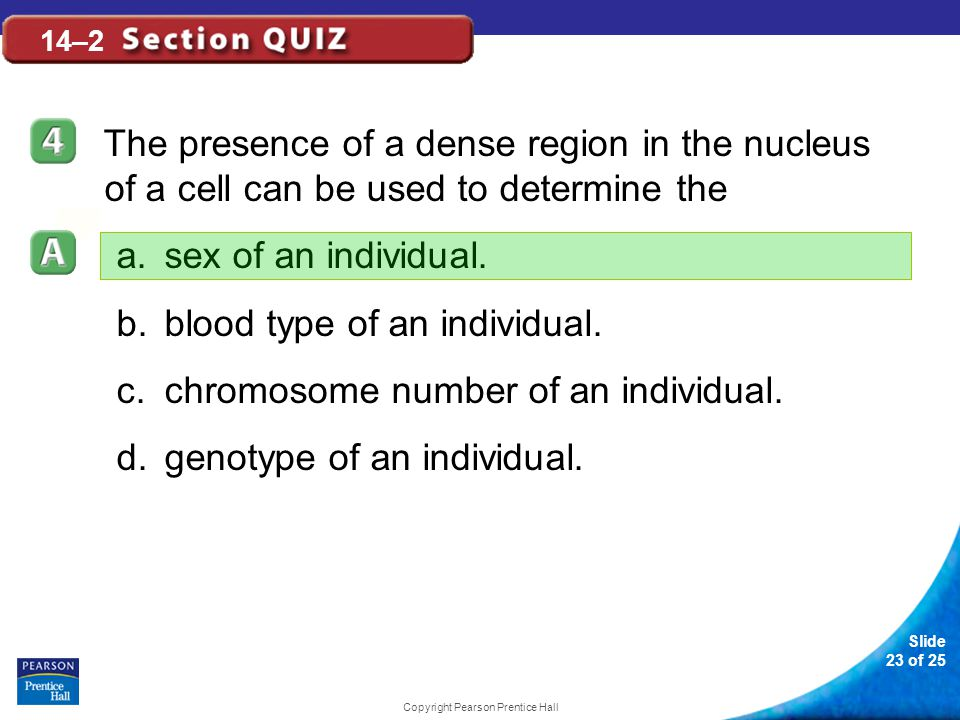 Slide 23 of 25 Copyright Pearson Prentice Hall 14–2 The presence of a dense region in the nucleus of a cell can be used to determine the a.sex of an individual.