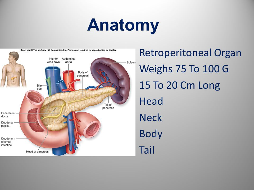 Anatomy Retroperitoneal Organ Weighs 75 To 100 G 15 To 20 Cm Long Head Neck Body Tail 2
