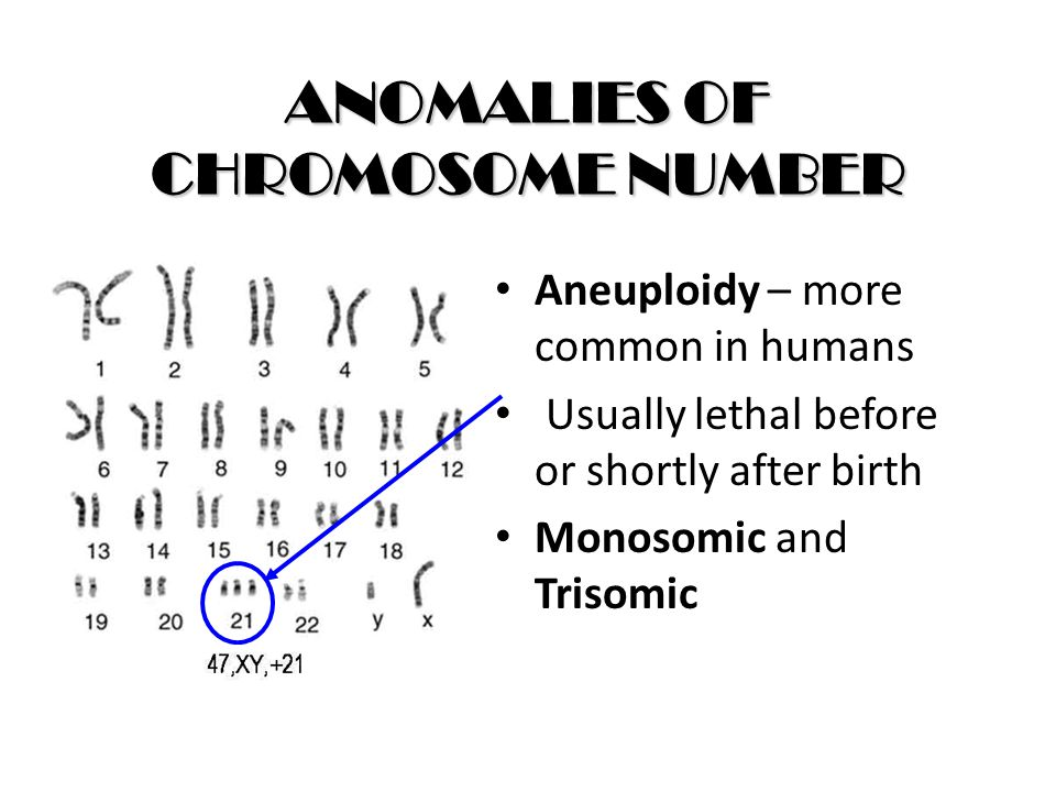 ANOMALIES OF CHROMOSOME NUMBER Aneuploidy – more common in humans Usually lethal before or shortly after birth Monosomic and Trisomic