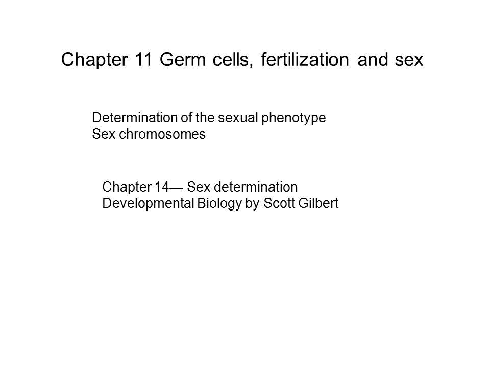Chapter 11 Germ cells, fertilization and sex Determination of the sexual phenotype Sex chromosomes Chapter 14— Sex determination Developmental Biology