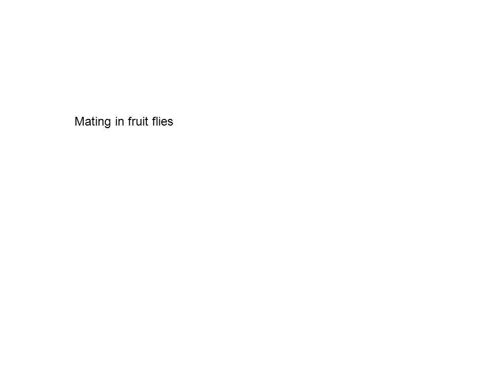 Mating in fruit flies