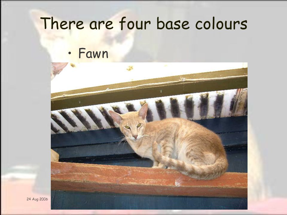 24 Aug 2006 There are four base colours Fawn