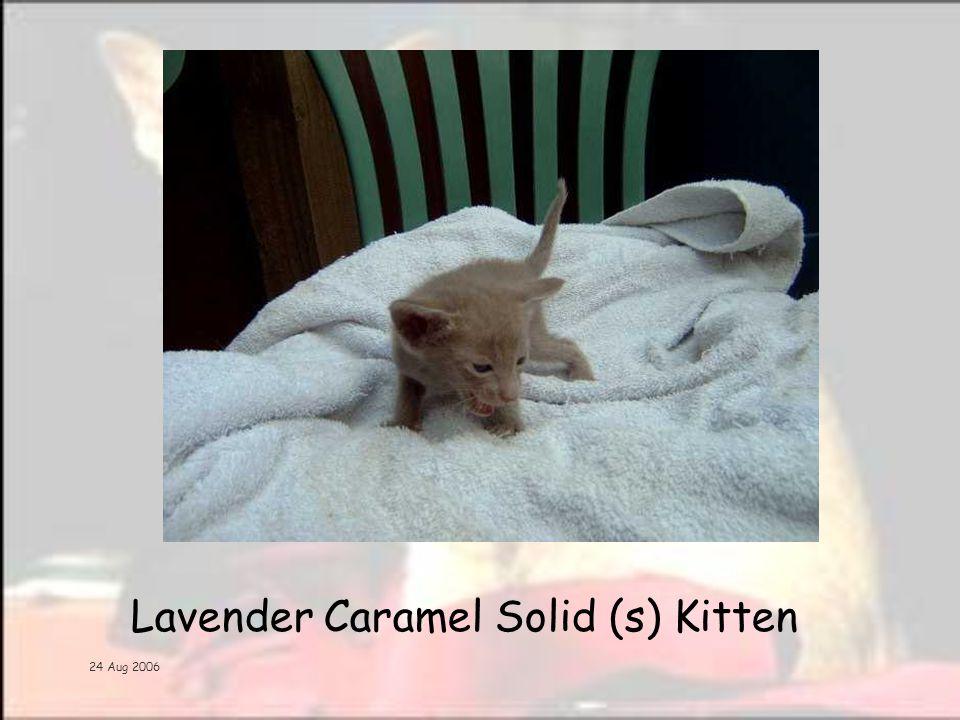 24 Aug 2006 Lavender Caramel Solid (s) Kitten