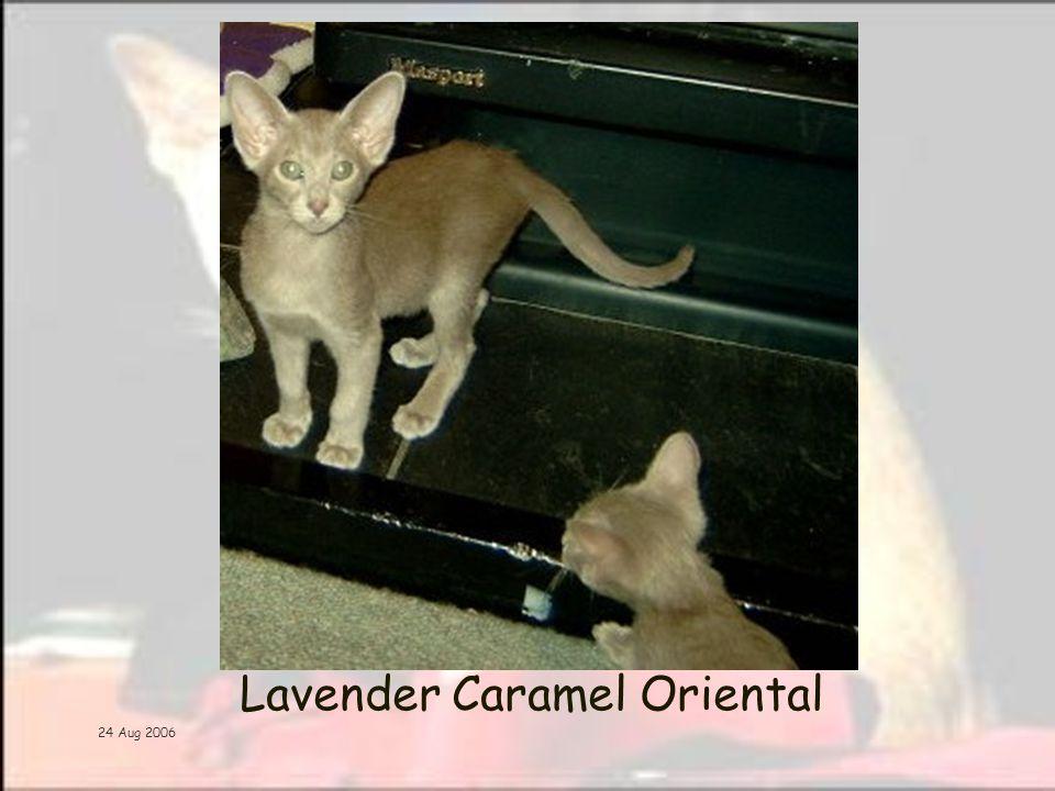 24 Aug 2006 Lavender Caramel Oriental
