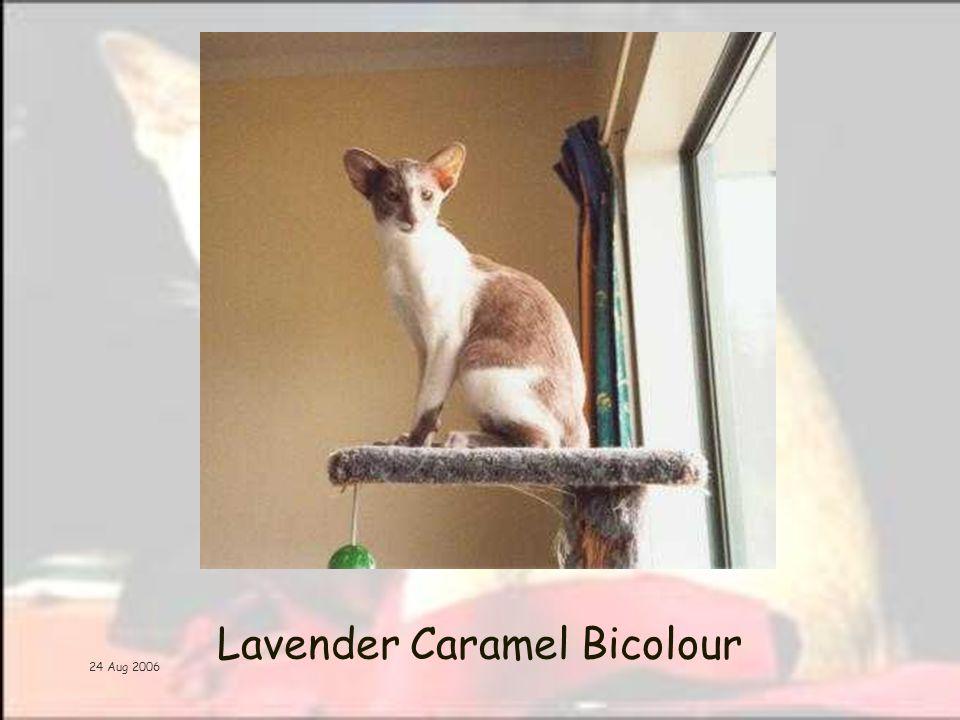 24 Aug 2006 Lavender Caramel Bicolour