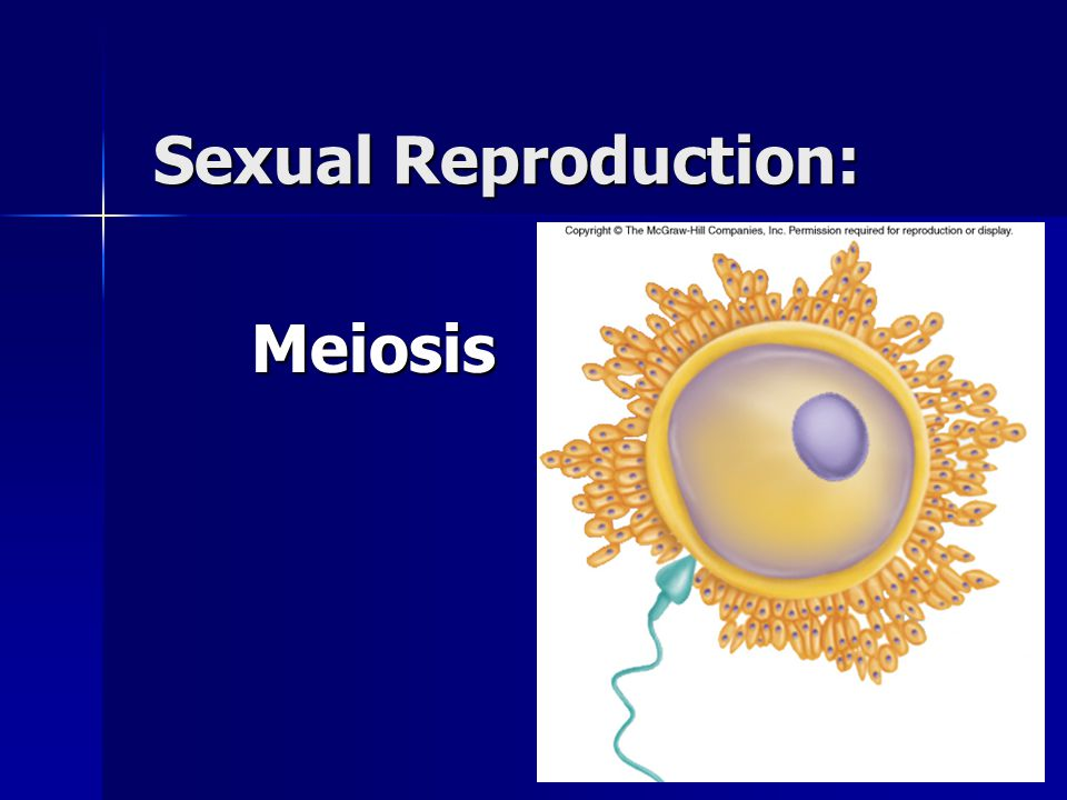 What is Sexual Reproduction.