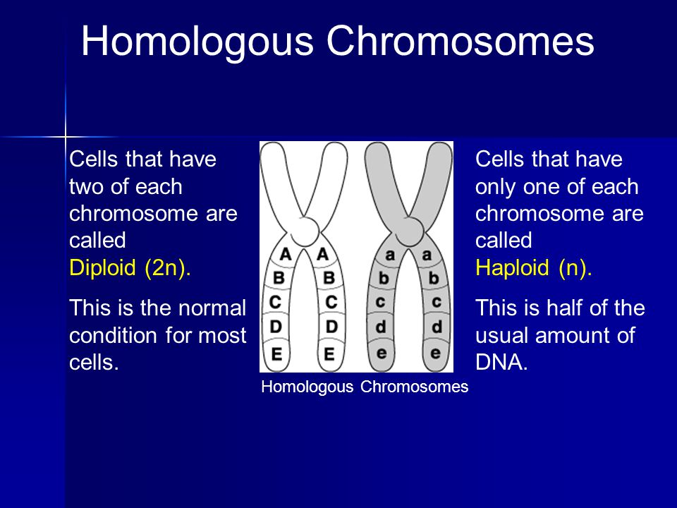 Homologous pairs separate Sister chromatids remain together. Meiosis 1 Anaphase 1