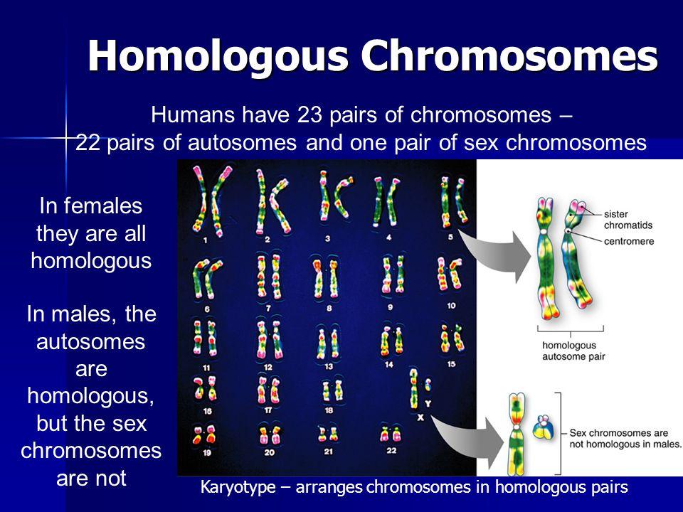 Klinefelter Syndrome XXY