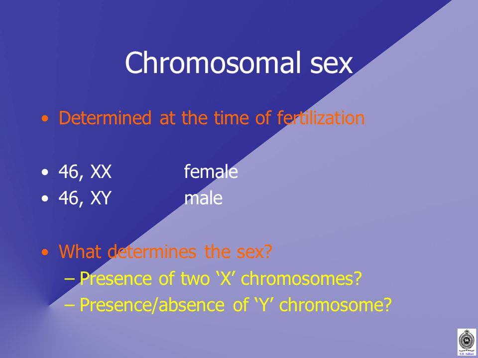 Chromosomal sex Determined at the time of fertilization 46, XXfemale 46, XYmale What determines the sex.