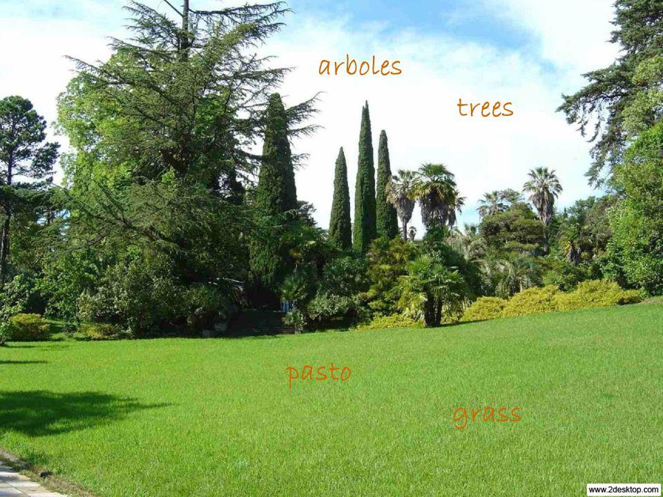 pasto arboles grass trees