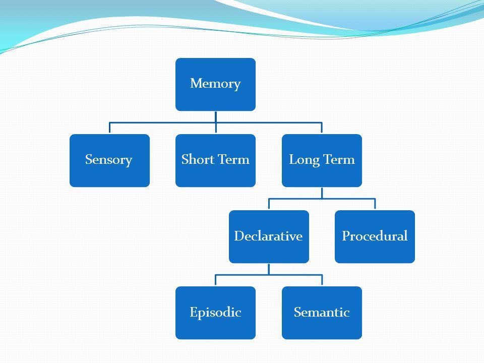 MemorySensoryShort TermLong TermDeclarative EpisodicSemantic Procedural