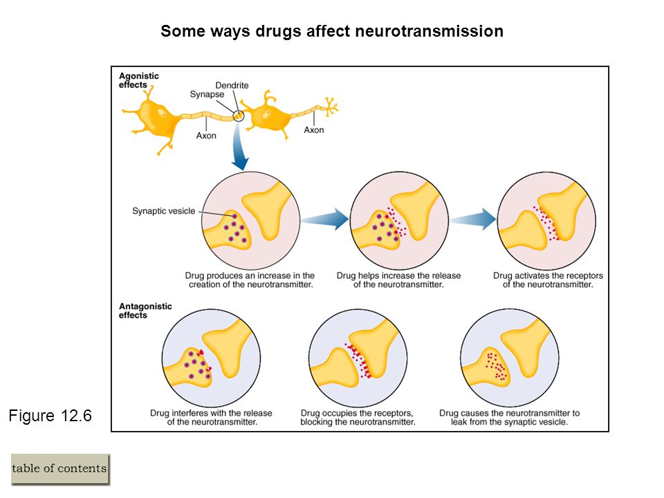 Figure 12.6 Some ways drugs affect neurotransmission