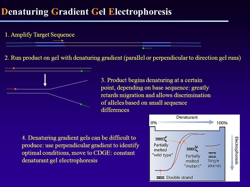 Denaturing Gradient Gel Electrophoresis 4.