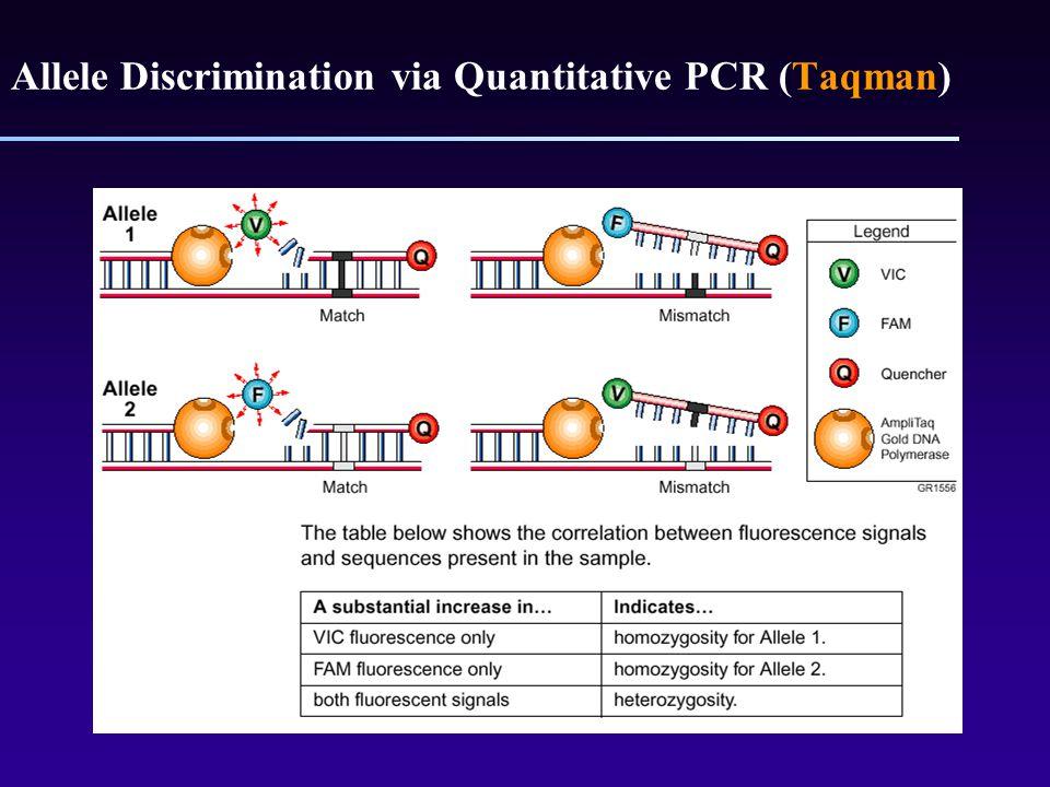 Allele Discrimination via Quantitative PCR (Taqman)