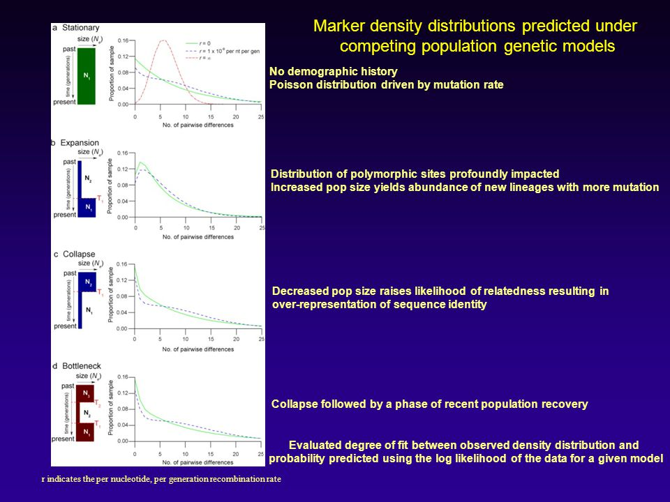 Marker density distributions predicted under competing population genetic models r indicates the per nucleotide, per generation recombination rate No demographic history Poisson distribution driven by mutation rate Distribution of polymorphic sites profoundly impacted Increased pop size yields abundance of new lineages with more mutation Decreased pop size raises likelihood of relatedness resulting in over-representation of sequence identity Collapse followed by a phase of recent population recovery Evaluated degree of fit between observed density distribution and probability predicted using the log likelihood of the data for a given model