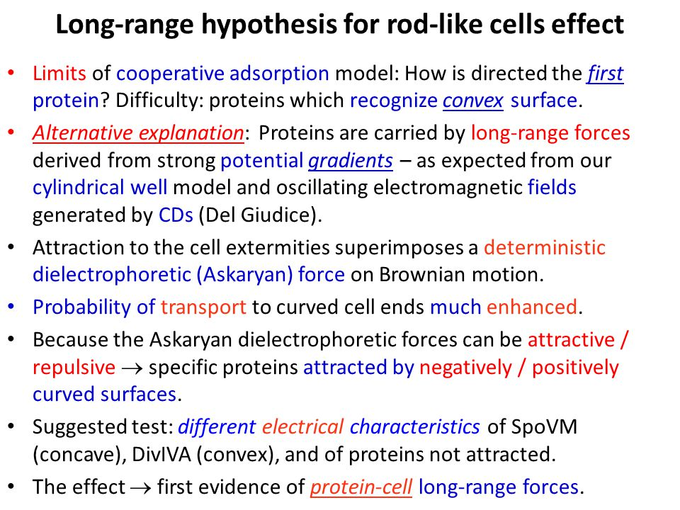 Long-range hypothesis for rod-like cells effect Limits of cooperative adsorption model: How is directed the first protein.