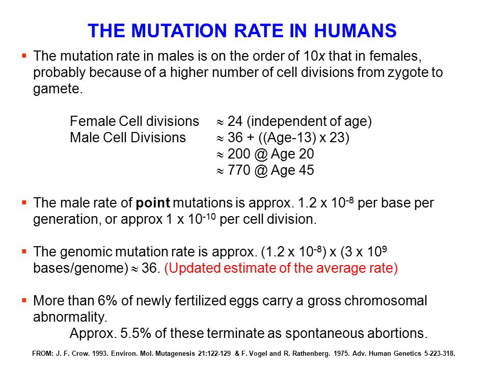 THE MUTATION RATE IN HUMANS  The mutation rate in males is on the order of 10x that in females, probably because of a higher number of cell divisions