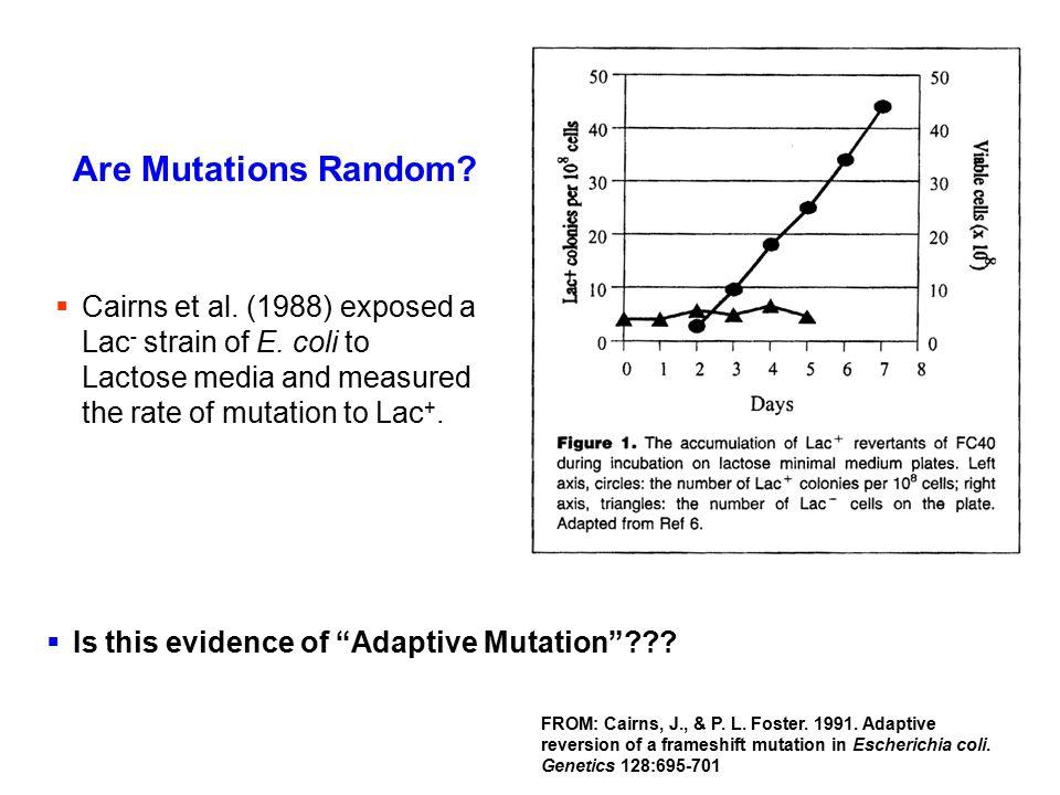 Are Mutations Random? FROM: Cairns, J., & P. L. Foster. 1991. Adaptive reversion of a frameshift mutation in Escherichia coli. Genetics 128:695-701 