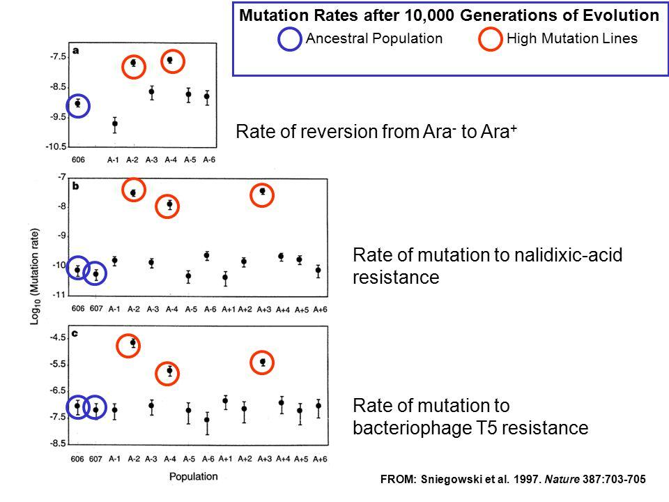 Mutation Rates after 10,000 Generations of Evolution Ancestral PopulationHigh Mutation Lines FROM: Sniegowski et al. 1997. Nature 387:703-705 Rate of