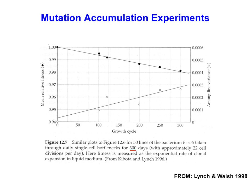FROM: Lynch & Walsh 1998 Mutation Accumulation Experiments