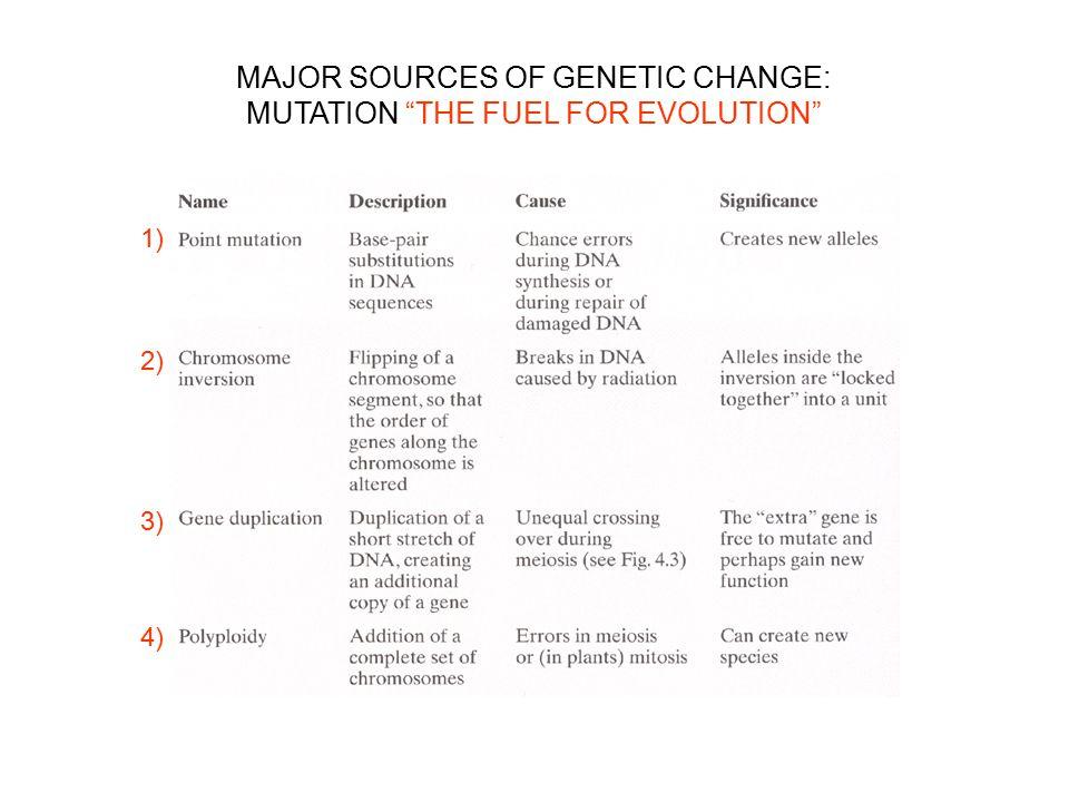 "1) 2) 3) 4) MAJOR SOURCES OF GENETIC CHANGE: MUTATION ""THE FUEL FOR EVOLUTION"""