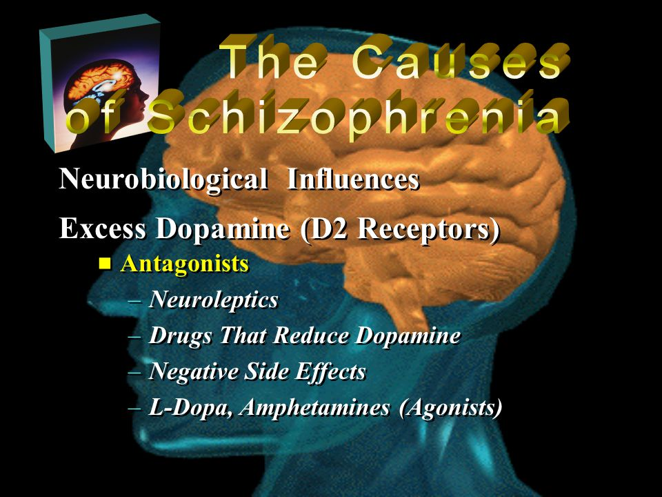  Antagonists –Neuroleptics –Drugs That Reduce Dopamine –Negative Side Effects –L-Dopa, Amphetamines (Agonists)  Antagonists –Neuroleptics –Drugs That Reduce Dopamine –Negative Side Effects –L-Dopa, Amphetamines (Agonists) Neurobiological Influences Excess Dopamine (D2 Receptors)