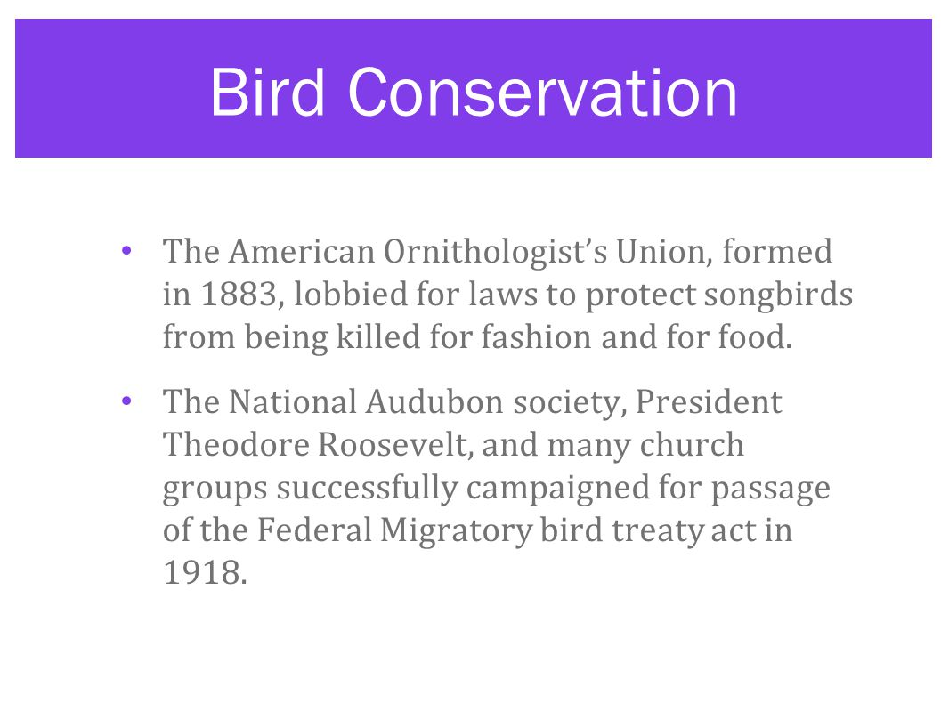 Bird Conservation The American Ornithologist's Union, formed in 1883, lobbied for laws to protect songbirds from being killed for fashion and for food.