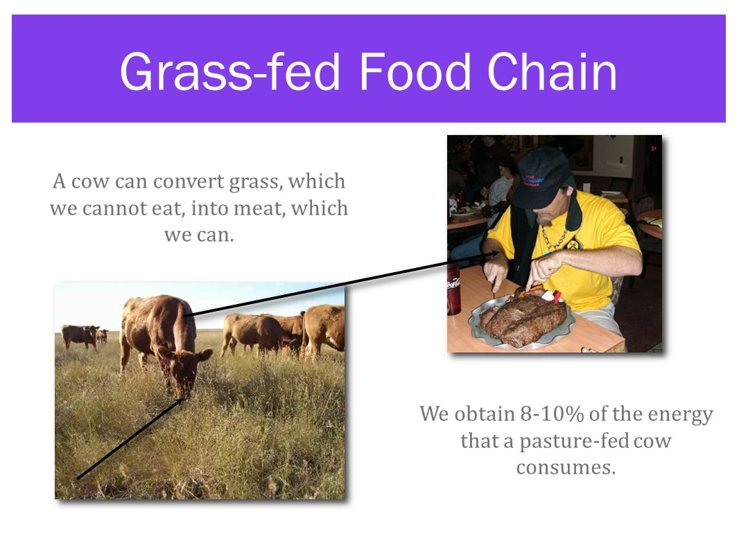Grass-fed Food Chain A cow can convert grass, which we cannot eat, into meat, which we can.