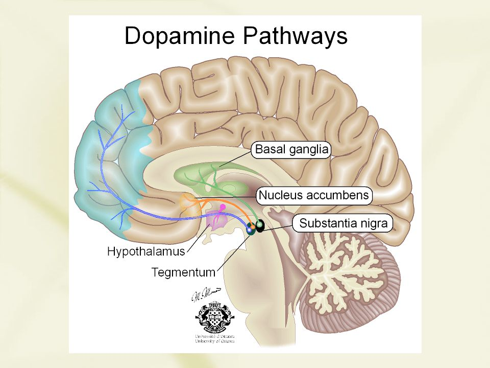 Schizoaffective Disorder Has features of both schizophrenia and affective disorders 0.5-0.8% lifetime prevalence .