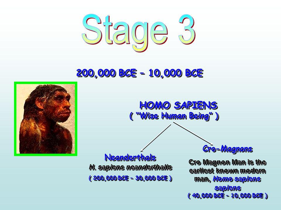41 200,000 BCE – 10,000 BCE HOMO SAPIENS ( Wise Human Being ) Neanderthals H.