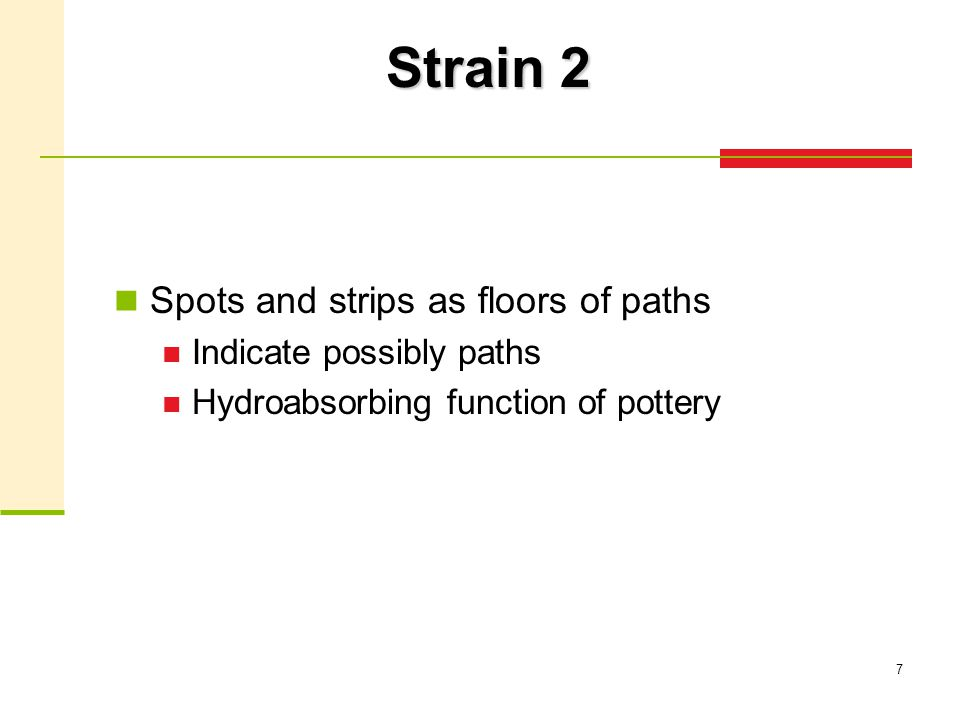 7 Strain 2 Spots and strips as floors of paths Indicate possibly paths Hydroabsorbing function of pottery