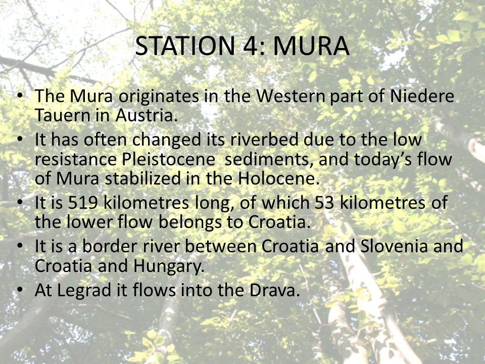 STATION 4: MURA The Mura originates in the Western part of Niedere Tauern in Austria.