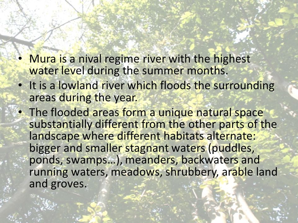 Mura is a nival regime river with the highest water level during the summer months. It is a lowland river which floods the surrounding areas during th