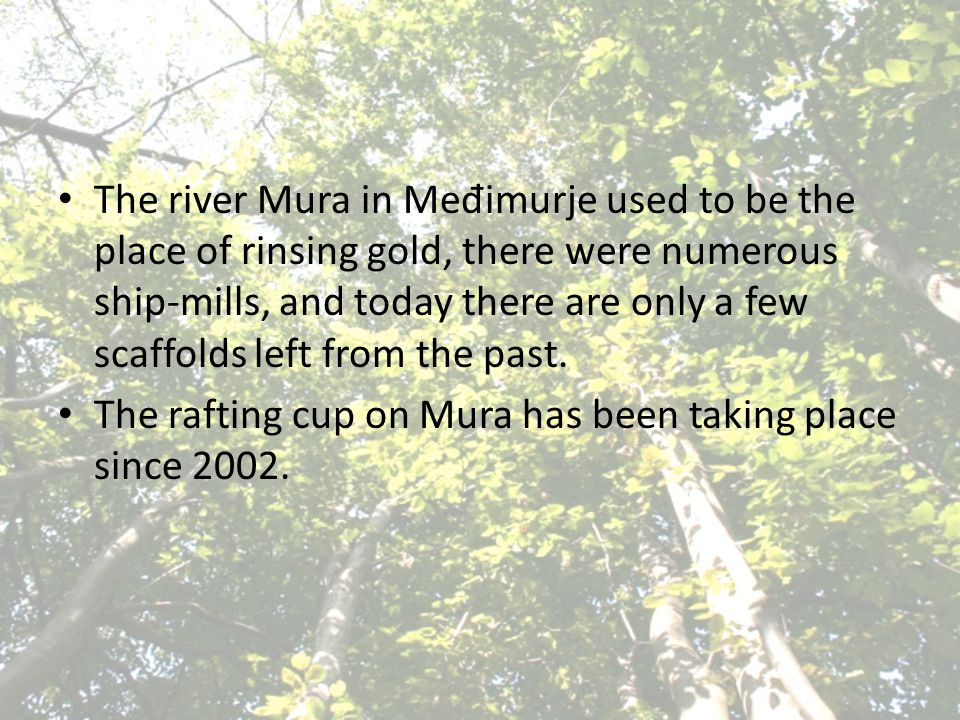 The river Mura in Me đ imurje used to be the place of rinsing gold, there were numerous ship-mills, and today there are only a few scaffolds left from the past.