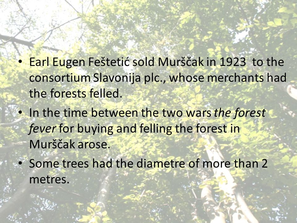 Earl Eugen Feštetić sold Murščak in 1923 to the consortium Slavonija plc., whose merchants had the forests felled. In the time between the two wars th