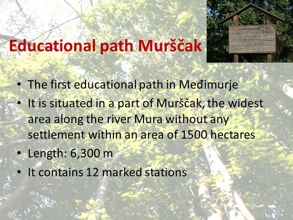 Educational path Murščak The first educational path in Me đ imurje It is situated in a part of Murščak, the widest area along the river Mura without any settlement within an area of 1500 hectares Length: 6,300 m It contains 12 marked stations