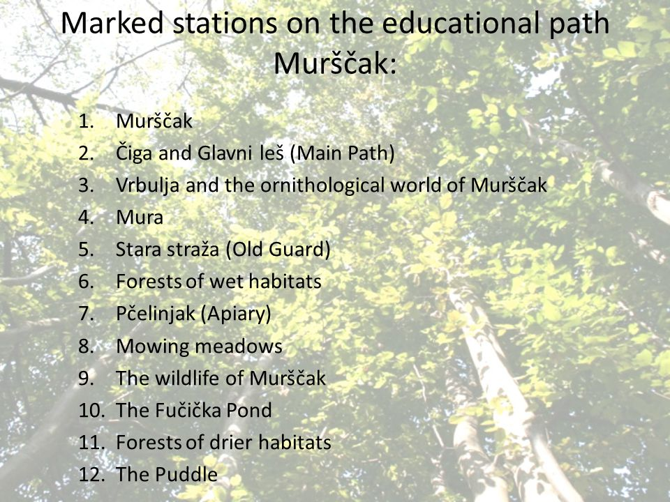 Marked stations on the educational path Murščak: 1.Murščak 2.Čiga and Glavni leš (Main Path) 3.Vrbulja and the ornithological world of Murščak 4.Mura 5.Stara straža (Old Guard) 6.Forests of wet habitats 7.Pčelinjak (Apiary) 8.Mowing meadows 9.The wildlife of Murščak 10.The Fučička Pond 11.Forests of drier habitats 12.The Puddle