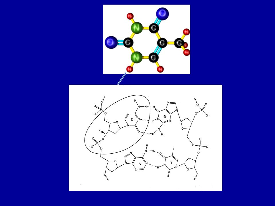 DEA to dibutyl phosphate (DBP) Constanze König, Janina Kopyra, Ilko Bald & EI Phys.