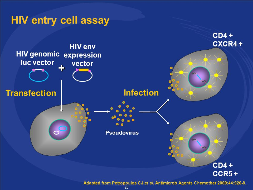 25 HIV entry cell assay Adapted from Petropoulos CJ et al.