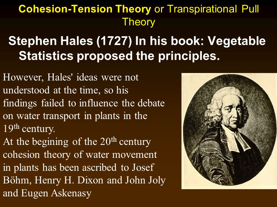 Cohesion-Tension Theory or Transpirational Pull Theory Stephen Hales (1727) In his book: Vegetable Statistics proposed the principles. However, Hales'
