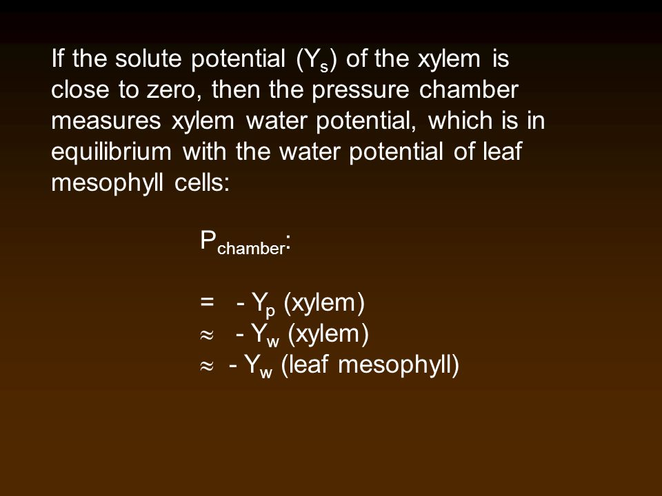 If the solute potential (Y s ) of the xylem is close to zero, then the pressure chamber measures xylem water potential, which is in equilibrium with t