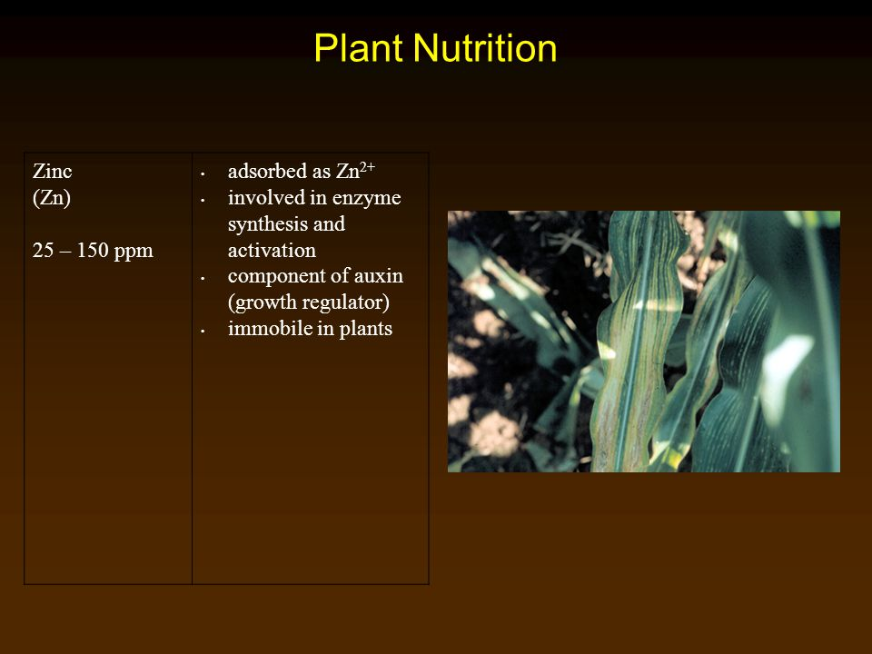 Plant Nutrition Zinc (Zn) 25 – 150 ppm adsorbed as Zn 2+ involved in enzyme synthesis and activation component of auxin (growth regulator) immobile in