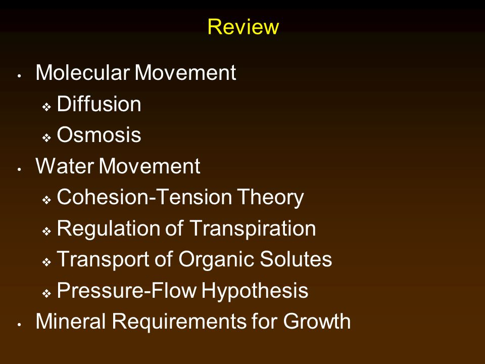 Review Molecular Movement  Diffusion  Osmosis Water Movement  Cohesion-Tension Theory  Regulation of Transpiration  Transport of Organic Solutes