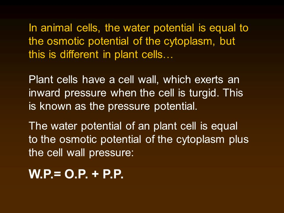 In animal cells, the water potential is equal to the osmotic potential of the cytoplasm, but this is different in plant cells… Plant cells have a cell