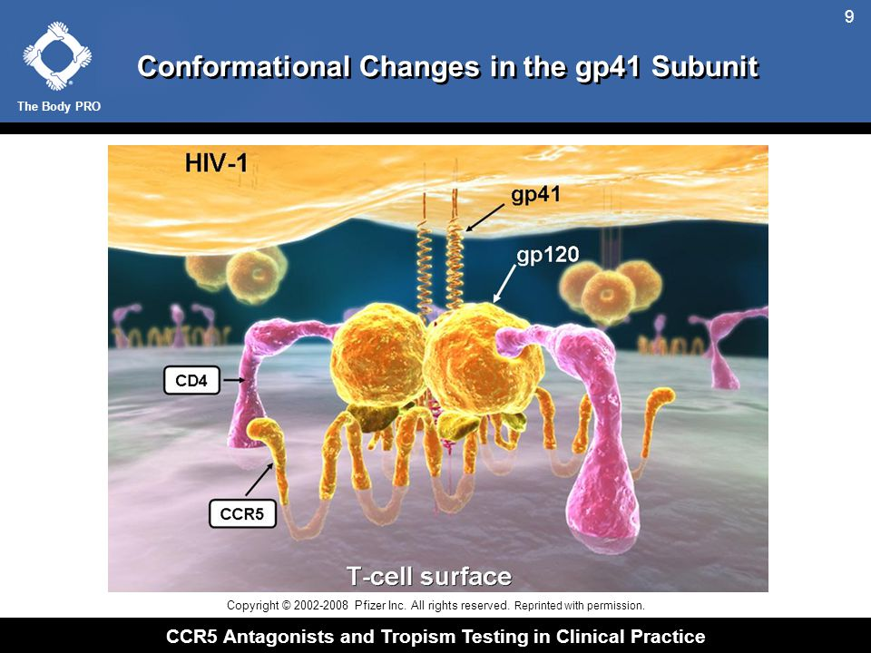 The Body PRO CCR5 Antagonists and Tropism Testing in Clinical Practice 9 Conformational Changes in the gp41 Subunit Copyright © 2002-2008 Pfizer Inc.
